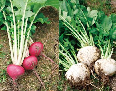 循環型農業の実践