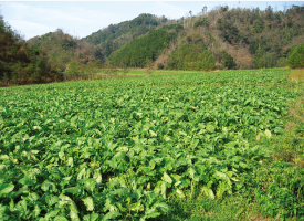 農業生産法人(株)京つけもの西利ファーム